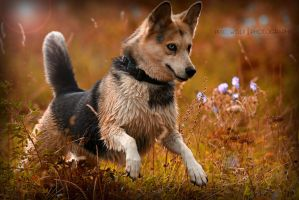 Dusty by PixelwolfPhotography