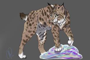 bobcat by NotActiveAnyMore
