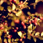 Autumn Berries by MarcoHeisler
