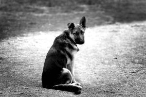Beautiful Child by Dogs-of-Oregon