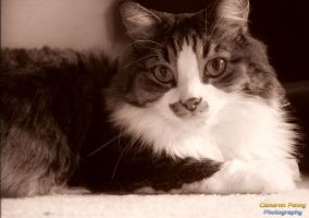 Oliver in Sepia by GarfieldP