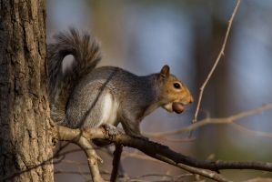 Squirrel 2 by bovey-photo
