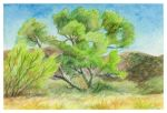 Spring Trees in the Wash by SuburbanAngst