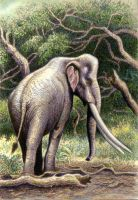 Palaeoloxodon (=Elephas) recki in colour by WillemSvdMerwe
