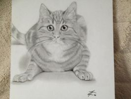Benedict the Cat by 4lisx