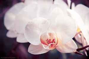 Orchidaceae by NatalieAster