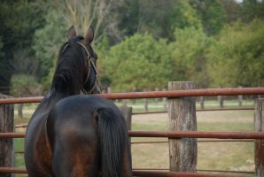 Standardbred27 by EquestrianPassion