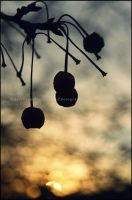 Sunrise In Bokeh by GrotesqueDarling13