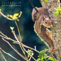 squirrel just hanging out by ellenzilla