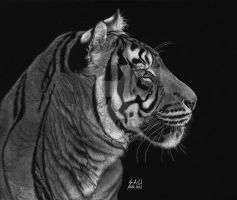 Siberian Tiger by SAU21866