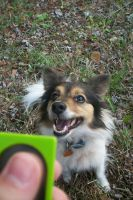 Clicker Training by Colliequest