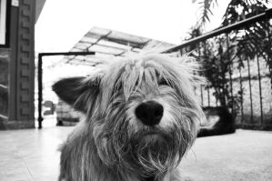 Just a cute dog. by sNiK7