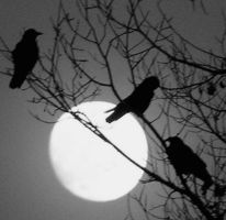 three crows by crawdad