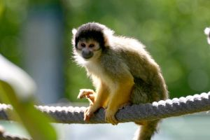 small monkey by cenkini