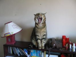 Laughing Cat by EvilLion