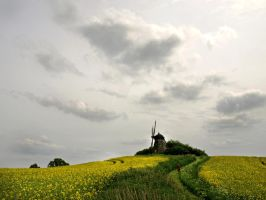 rapeseed is energy by Henriksen