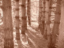 Row of Pines Sepia Tone by superclayartist