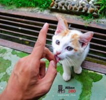 Yes please by SyazwanAQ