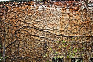 Wall of angry nature by Pureeavle