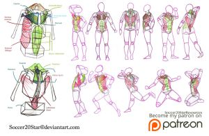 Poses with Torso Muscles by Soccer20Star