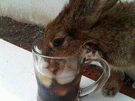 My Rabbit Loves Coke by nvs911