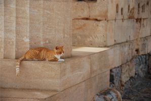 Antique cat by hembba