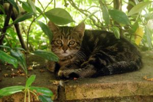 small cat by cleverless