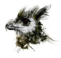 Harpy Eagle by DuncanDraws