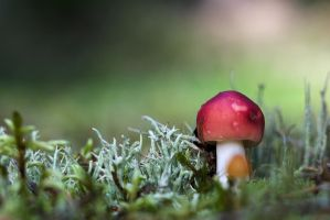 Mushrooms #4 by perost
