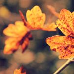 Last leaves by Lilith1995