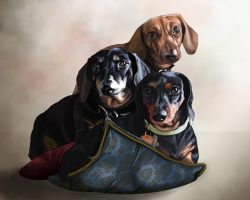 Dachshunds by Doe-Eyed-Monster