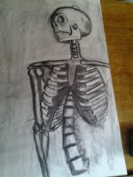 Skeleton Study 04 by liekomgkristy