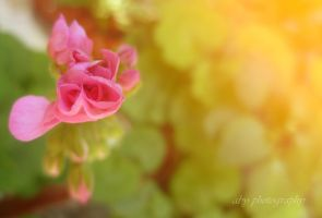 pink flower by aby192