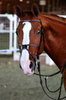 That's Your Game Face? by EquineImages