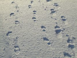 Footsteps in the Snow by panthera-lee