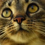 nose'n whiskers by Wilithin
