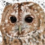 Monsey Tawny Owl by VisualCondyle
