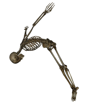 Skeleton - Swan Dive - PNG by markopolio-stock