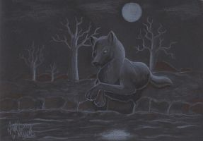 Wolf in the night by TonyCrynight