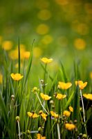 Spring Meadow by evecharlotte