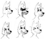 Danwolf face expressions by danwolf15