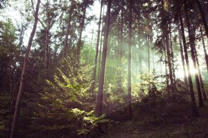 Im Wald 2 by Freacore