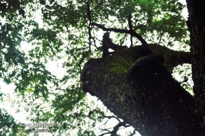 In a tree. by miguelm-c