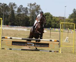 STOCK Showjumping 381 by aussiegal7