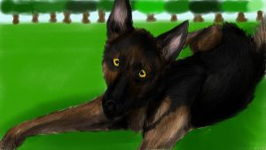 .:German shepherd:. by matrix9000