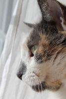 cat looking by taevans