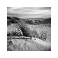Marram Grass II by Talkingdrum