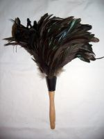 Feather Duster by EverydayStock