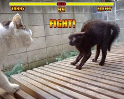 FIGHT by Yumkie