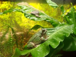 Frog. by ClaudiaConstantino